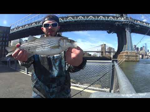 CHASING SEVENS - URBAN FISHING: DOWNTOWN BROOKLYN