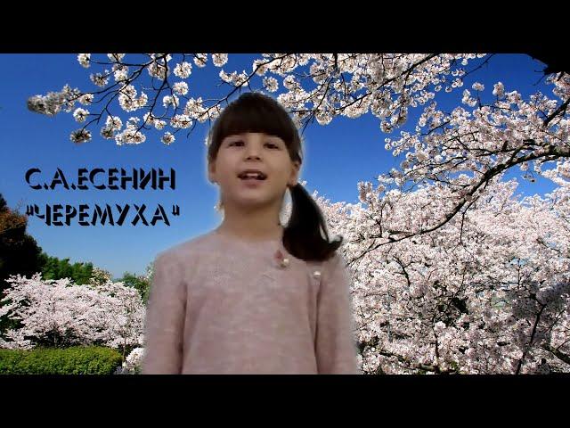 Изображение предпросмотра прочтения – АннаБжуникова читает произведение «Черёмуха» С.А.Есенина