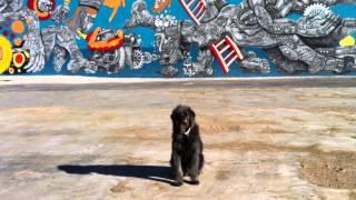 Dog Training Las Vegas | Obedience School