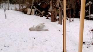 Южнорусская овчарка 4 с половиной месяца