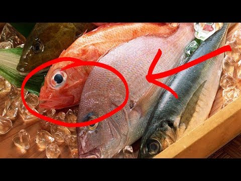 Ternyata 6 ikan Ini GAK BOLEH DIMAKAN ... Serem..