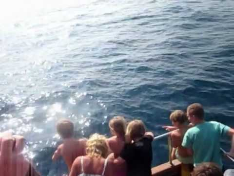 Delfine Kroatien Rovinji  07.06.2012