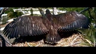 SWFLEagles~Hanging Out On The Veranda ~ 3-9-2015