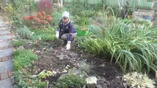 видео Мульчирование почвы: для чего, своими руками, из коры, декоративная, как использовать, на зиму, полив