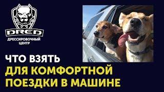 Что нужно иметь для комфортной поездки с собакой в машине | Как перевозить собаку