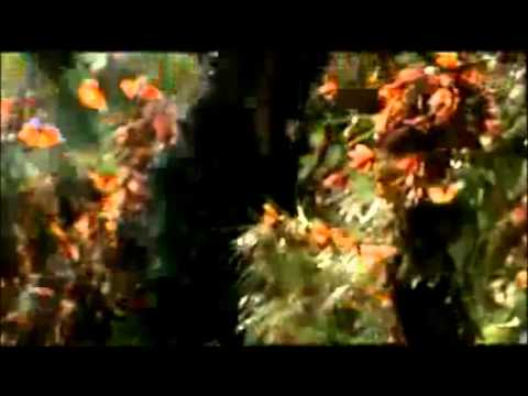 Mariposas Amarillas - Macondo