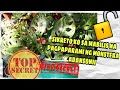 Monstera Adansonii Propagation 🌿Pinakamabilis na paraan ng pagpaparami 💯% ✅✅