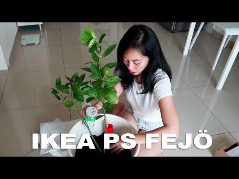 download IKEA PS Fejö Self-Watering Pot x Limau Kasturi Tree