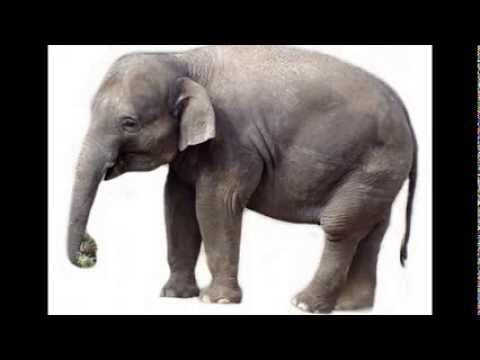 Dear Zoo Song (Based on the book by Rod Campbell) by JK