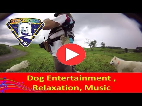 offline-now-|-dog-entertainment-|-free-raging-|-dog-relaxation-|-dog-music