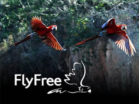 Fly Free: Saving Parrots from the Wild Bird Trade