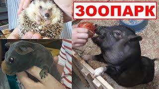 Трогательный зоопарк. ЭКЗОТИЧЕСКИЕ ЖИВОТНЫЕ. Что посмотреть интересного в Кирилловке (Украина)?