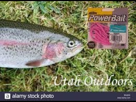 INSANELY FAST AND EASY! Trout Fishing with pink worms
