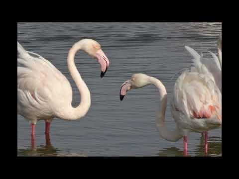 Ras Al Khor Wild life Sanctuary | Flamingos in Dubai