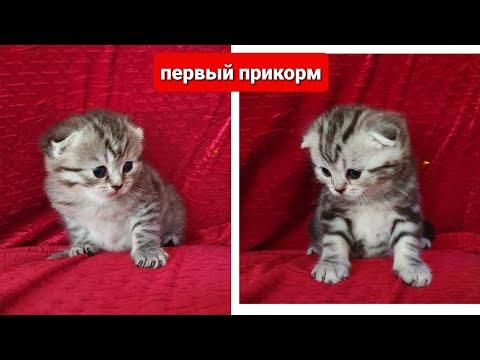 Котята. Первый прикорм.