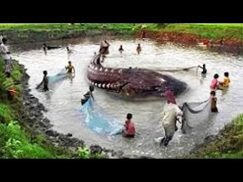 biggest animals ever caught youtube