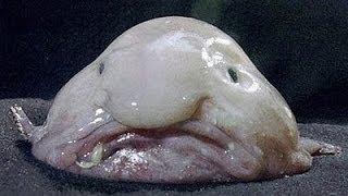 Top 10 Truly Bizarre Creatures You Won't Believe Exist