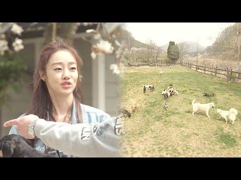 최여진, 집에서 함께 살고 있는 50마리의 강아지 공개! @스타꿀방대첩 '좋아요' 20160520