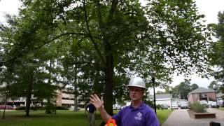 How to measure tнe average crown diameter of a tree