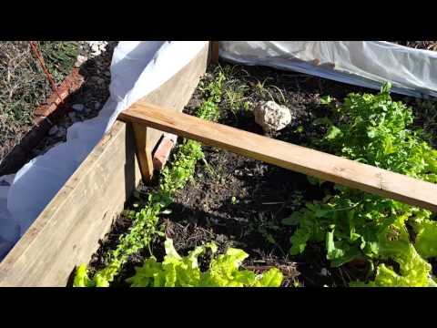 Simple Midwest Winter Vegetable Garden In December Zone Kansas Low Cost