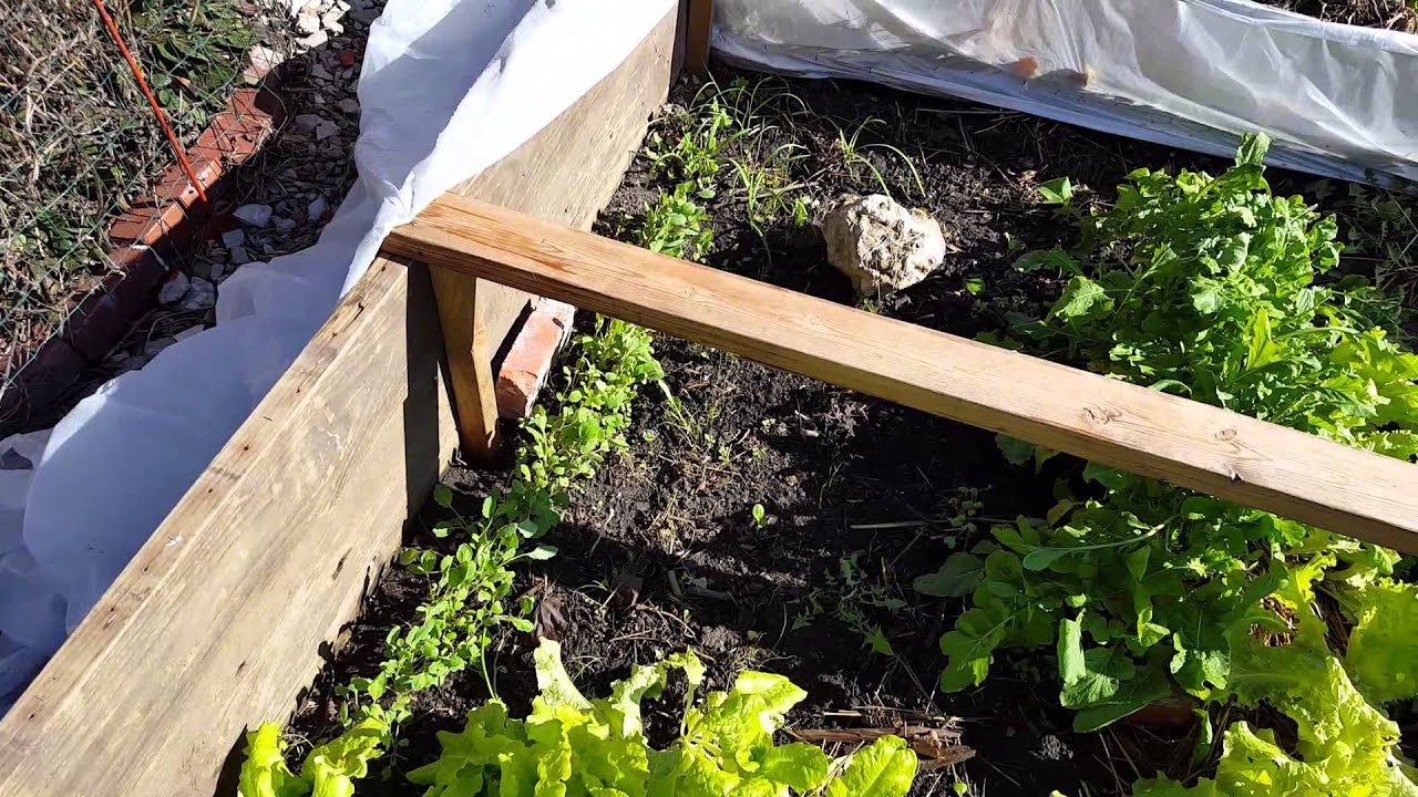 simple midwest winter vegetable garden in december zone 6 kansas