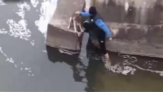 【救出劇】動物を救出する英雄たち rescue animal HERO