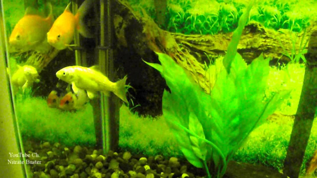 Freshwater fish growth rates - Freshwater Fish Growth Rates