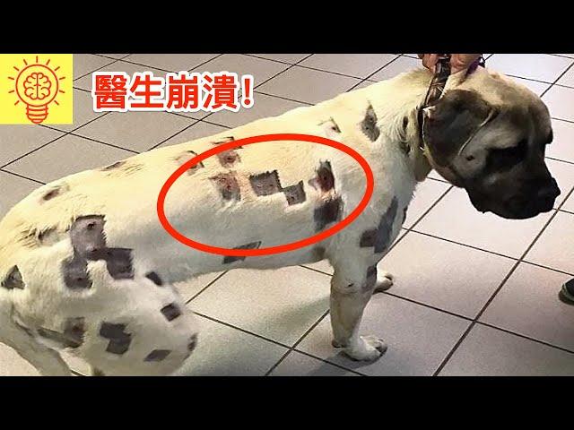 當醫生見到這狗狗身上的痕跡時,當場崩溃了!