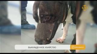 Зоозащитники призывают ужесточить правила содержания собак