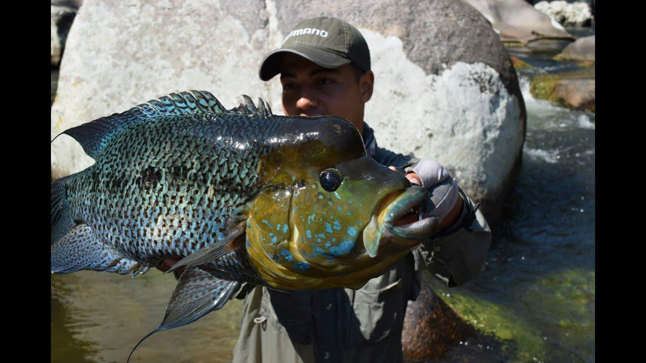 Cristian vanegas pesca de mojarra azul en colombia for Proyecto de criadero de mojarras
