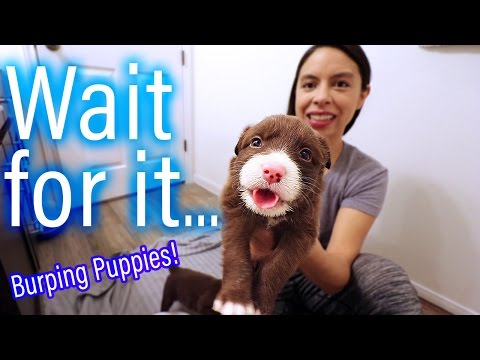 Day 15: Burping Puppy | Happy Thanksgiving!