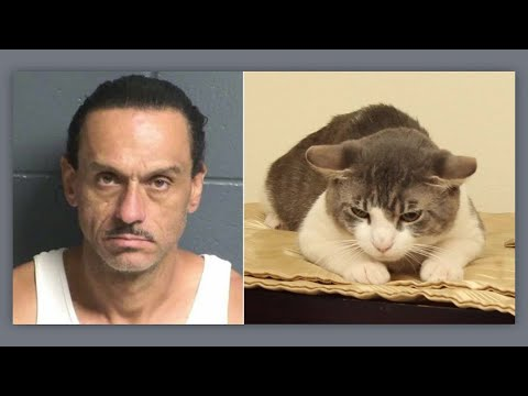 T-Bone - Man Arrested After Force-Feeding Meth To His Cat