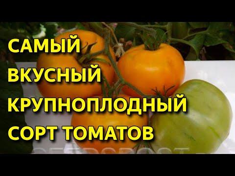 Самый вкусный СОРТ биф томатов. Раннеспелый и устойчивый ко всем болезням. Томат Ананас Бильбао! | крупноплодный | самойлова | земляника | эксперты | светлана | вкусный | томата | томат | самый | канал