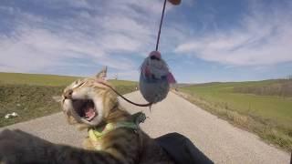 Cat riding Bike 😻