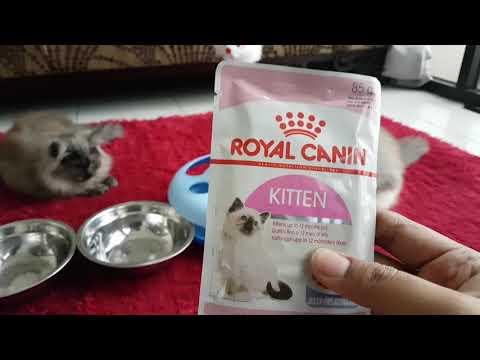Makanan Untuk Anak Kucing Royal Canin Wet Food For Cats Youtube
