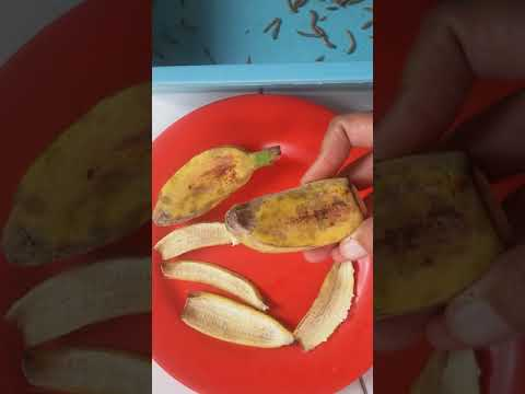 Makanan Atau Cemilan Sehat Yang Murah Meriah Untuk Ulat Hongkong