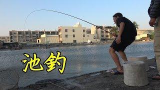 釣魚記~超大台灣鯛直接爆線(☍﹏⁰) 台南休閒池釣!