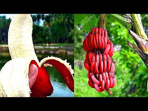 So ein Obst und Gemüse hast du noch nie gesehen!