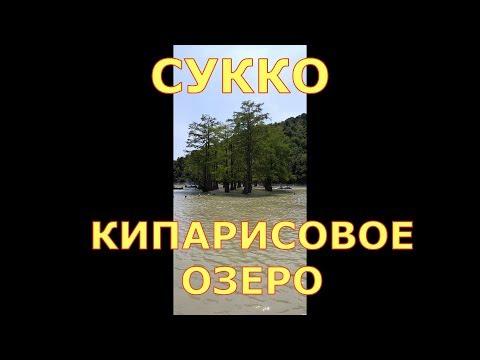 #Кипарисовое озеро  в СУККО,  древние кипарисы (31 июля 2019 г.)