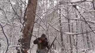 Охота на куницу с лайкой