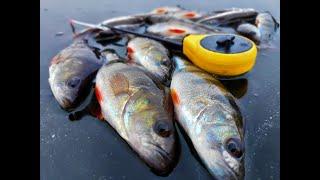 ЛОВЛЯ ОКУНЯ зимой 2020 Зимняя рыбалка 2020 Клуб рыбаков и Михалыч не ловил такого мелкого окуня