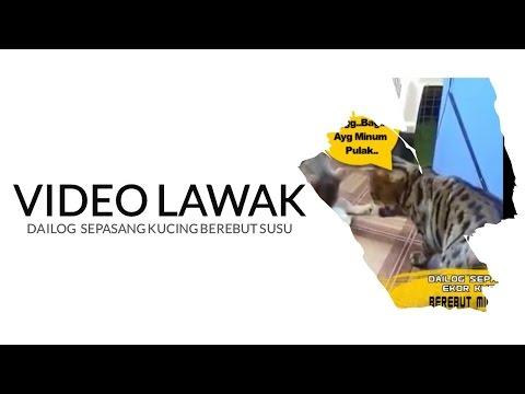 Video Lawak Dailog kucing berebut susu