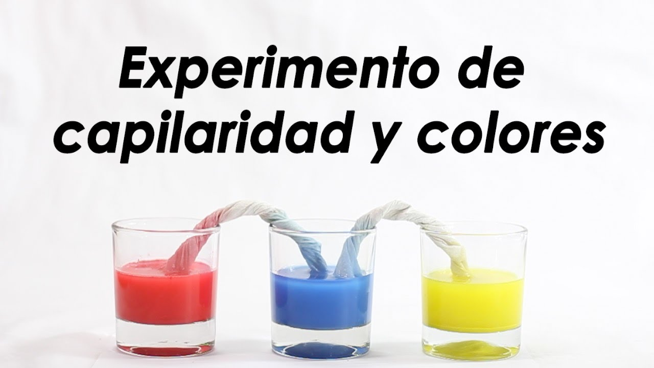 Capilaridad con colores  Experimentos caseros  Ciencia