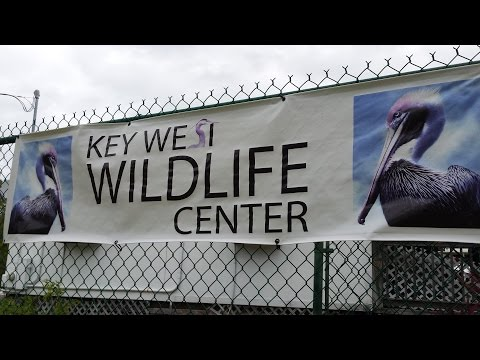 Key West - Wildlife Refuge (Rescue Center)