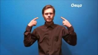 Русский жестовый язык. Урок 14. В мире животных
