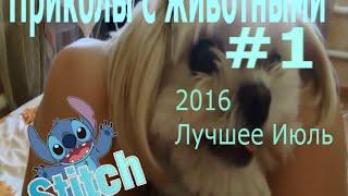 Приколы с животными 2016 ИЮЛЬ ЛУЧШЕЕ #1