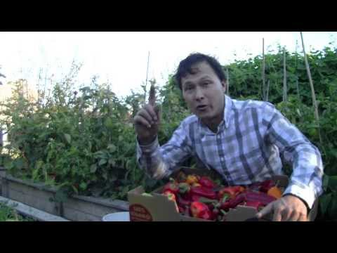 Organic Pest Control - End Problems with Bugs Forever in Your Garden