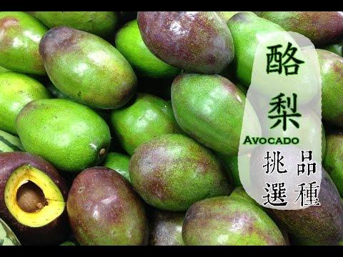 【秋】酪梨如何挑選才好吃