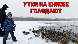 Природа Красноярска / Голодные утки зимой / Покупки в Леруа мерлен / Влог