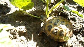 Что кушает черепаха